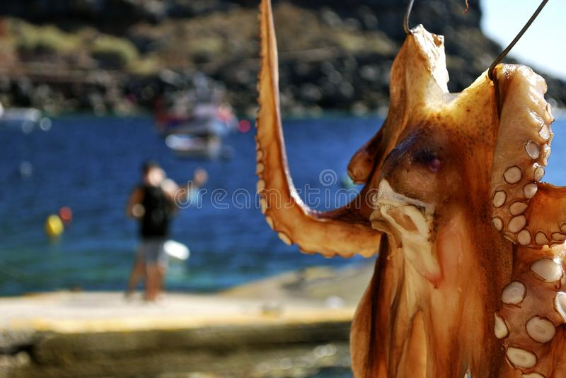 Octopus in Greece. Octopus hanging to dry in Ammoudi Bay, Santorini, Greece royalty free stock photography