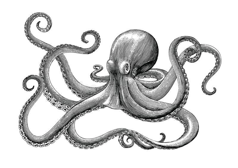 Octopus hand drawing vintage engraving illustration on white backgroud royalty free illustration