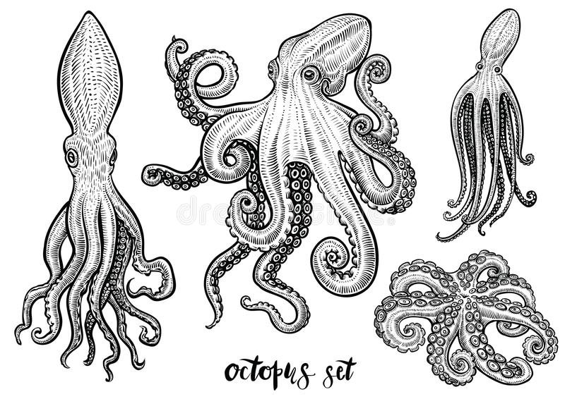 Octopus hand drawn vector illustrations. Black engraving sketch isolated on white. stock illustration