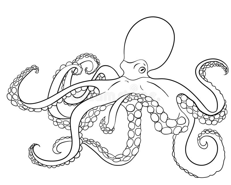 Octopus with high details. stock vector. Illustration of ...