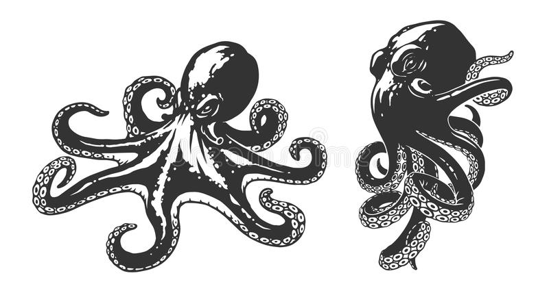 Octopus illustration. In vector on white background vector illustration