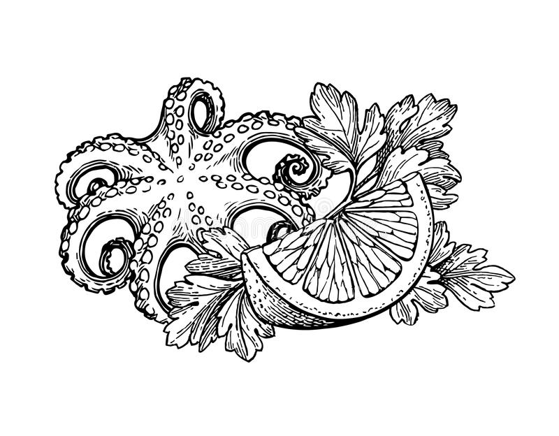 Octopus ink sketch. Octopus with lemon and parsley. Seafood ink sketch. Isolated on white background. Hand drawn vector illustration. Retro style. Editable stock illustration