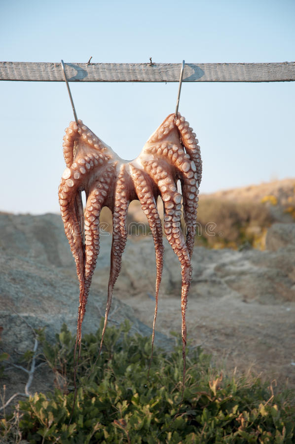 Download Octopus stock image. Image of beam, background, macro - 33274981