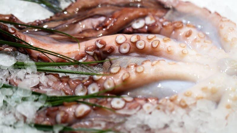 Octopus op ijs op de teller royalty-vrije stock afbeeldingen