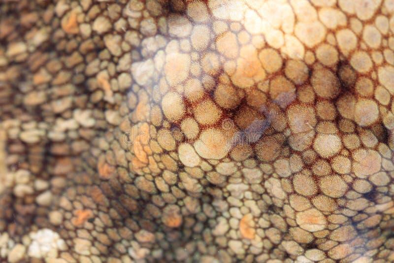 Octopus skin royalty free stock image