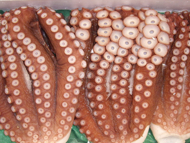 Octopus tentacles stock photos