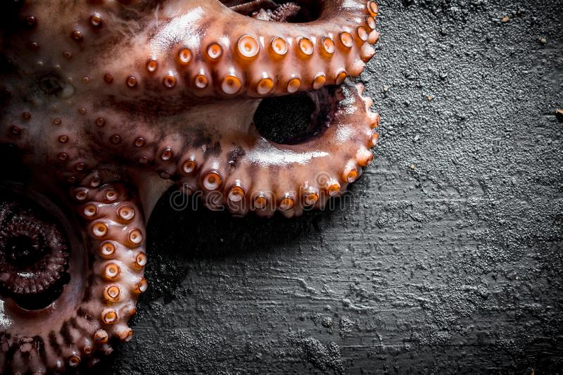 The octopus tentacles food. On black rustic background royalty free stock photography