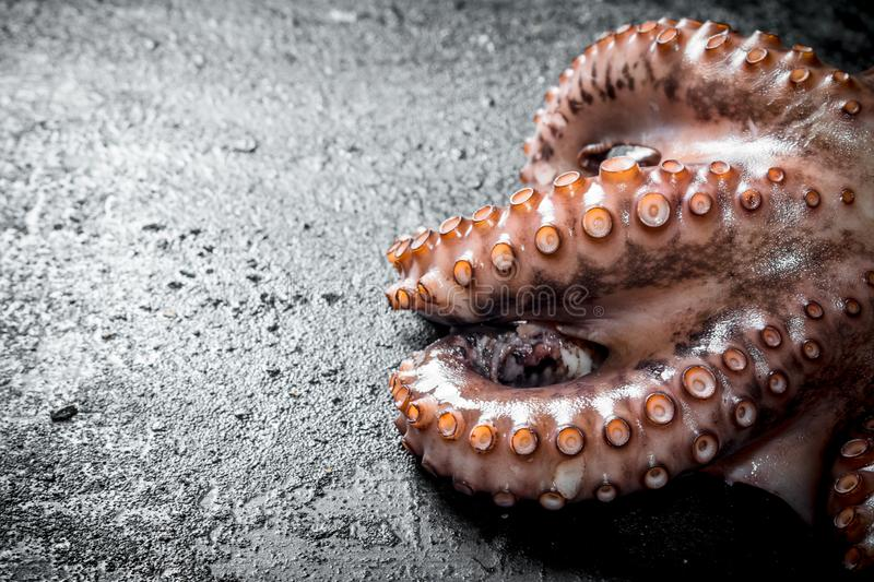 The octopus tentacles food. On black rustic background royalty free stock image