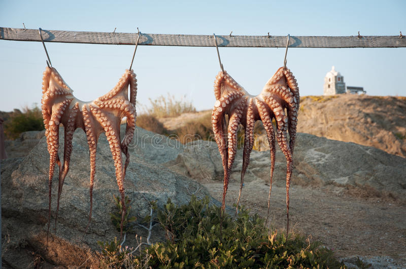 Download Octopus stock image. Image of greece, health, animal - 33263567