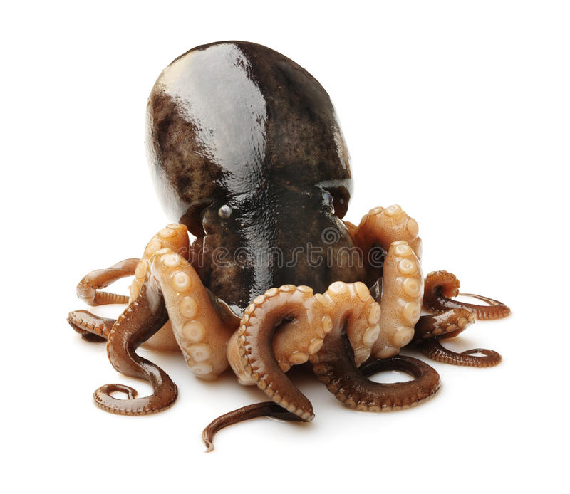 Octopus on white background stock images