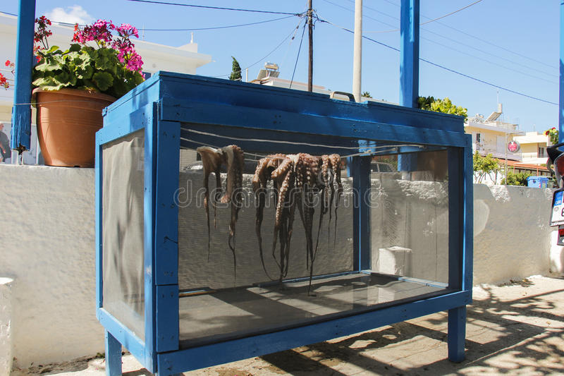 Octopuses. Octopus drying in the sun in Kos island stock photography