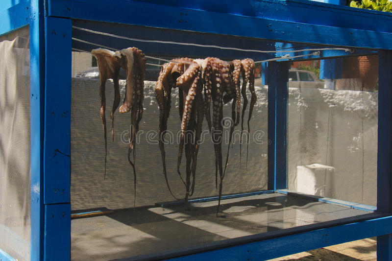 Octopuses. Octopus drying in the sun in Kos island stock image