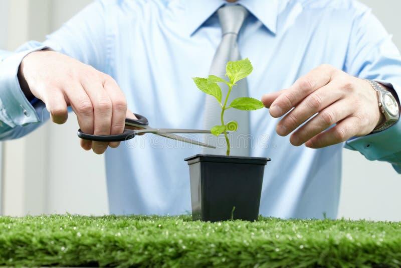 Ocupando de uma planta imagem de stock