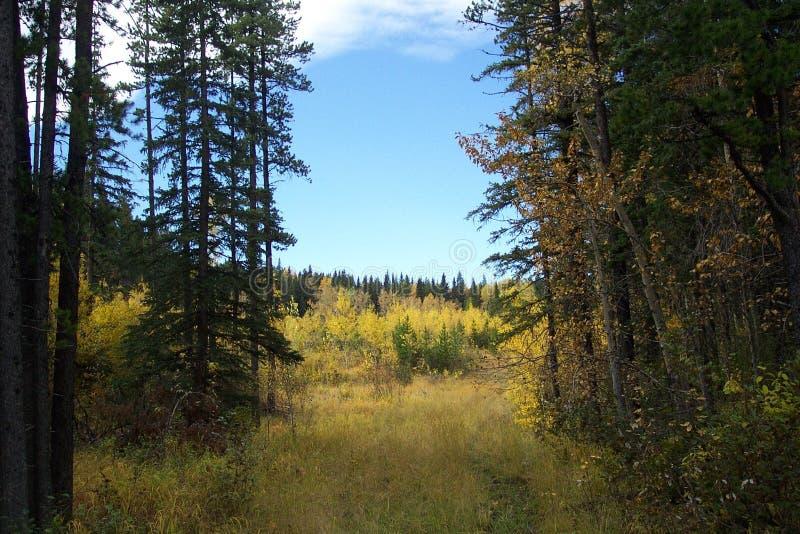 Download Oczyścić obraz stock. Obraz złożonej z łąki, kolor, drzewa - 142879