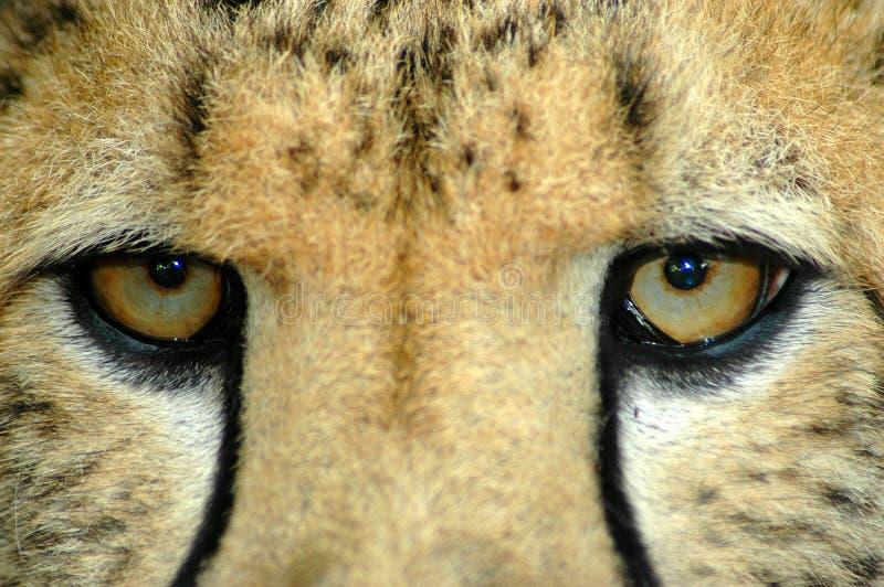 oczy kocich s zdjęcia stock