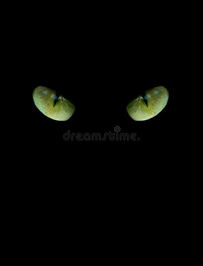 Oczy kot na czarnym tle zdjęcia royalty free