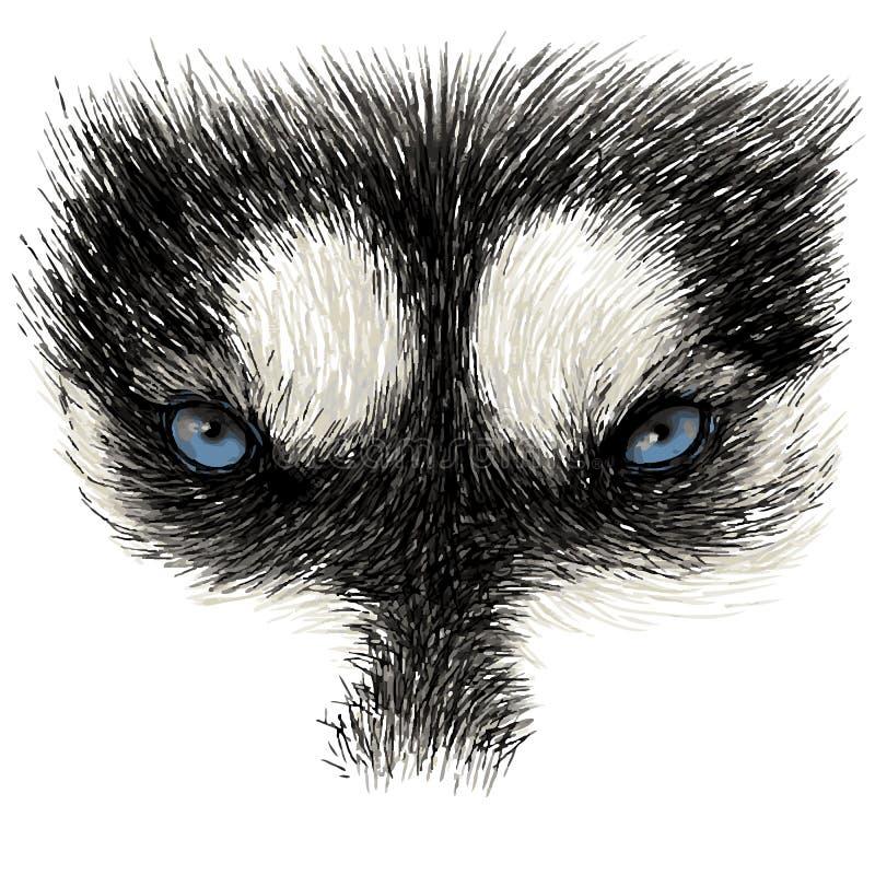 Oczy Syberyjski husky royalty ilustracja