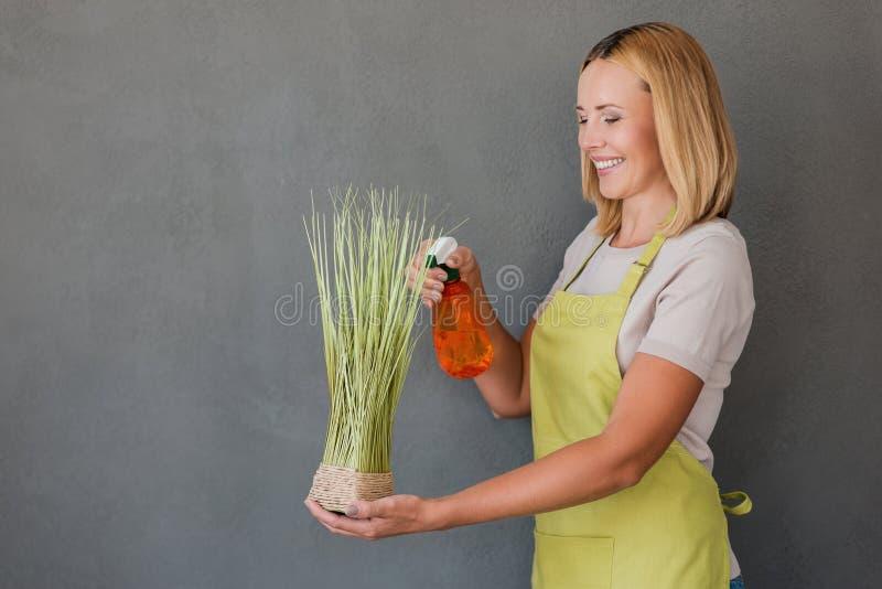 Odświeżająca roślina zdjęcia royalty free