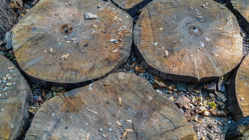 od在圈子、叶子和岩石的木Choped的关闭在地面上 自然本底墙纸 免版税库存照片