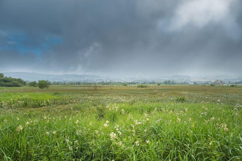 Od Daleko bocznego Grodowy Semple Patrzeje Nad wysoką dzikiego żyta trawą macha Lochwinnoch miasteczko zakrywający w Mglistym Thu obrazy stock