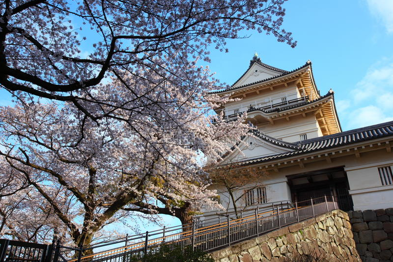 Odawara Castle and cherry blossom royalty free stock images