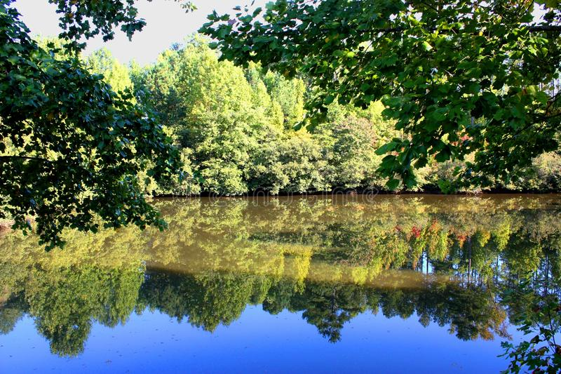 odbić jeziorni drzewa fotografia royalty free