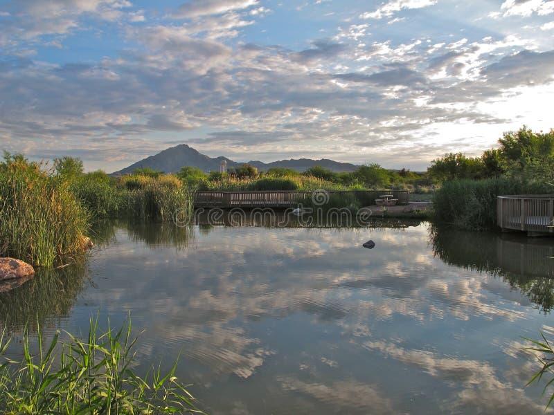 Odbicia, Clark okręgu administracyjnego bagien park, Las Vegas, Nevada zdjęcie stock
