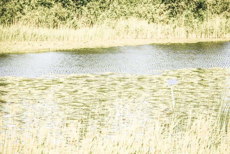 Odbicia w spokojnej jezioro wodzie z wodnymi lelujami i pustym b zdjęcia stock