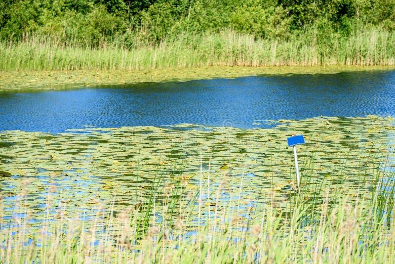 Odbicia w spokojnej jezioro wodzie z wodnymi lelujami i pustym b zdjęcia royalty free
