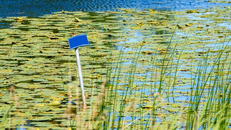 Odbicia w spokojnej jezioro wodzie z wodnymi lelujami i pustym b zdjęcie stock