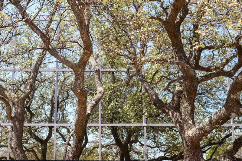 Odbicie drzewa i niebo w nowożytnym budynku biurowym - tło zdjęcia stock