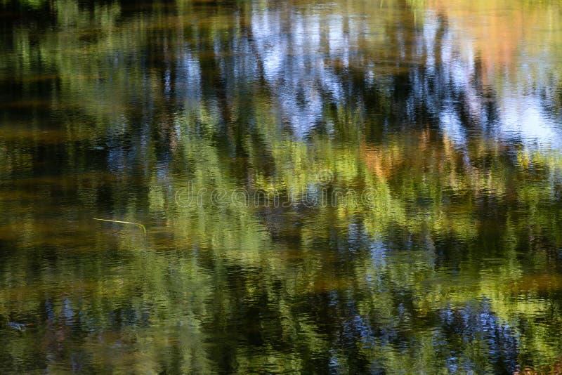 Odbicie drzewa na Piaskowatym strumieniu w jedności Maine zdjęcie stock