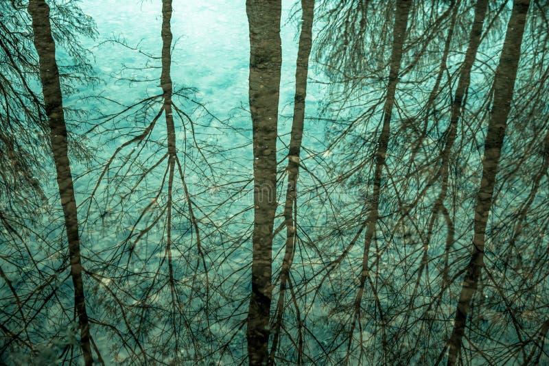 Odbicie drzewa w wodzie zdjęcie stock