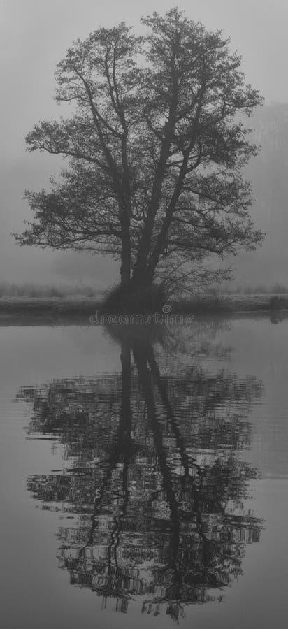 Odbicie drzewo na banku Rzeczny Wey, Surrey czarny white fotografia stock