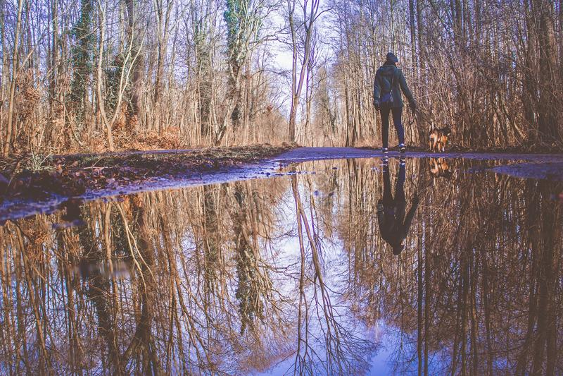 Odbicie pies na wodzie i kobieta zdjęcie stock