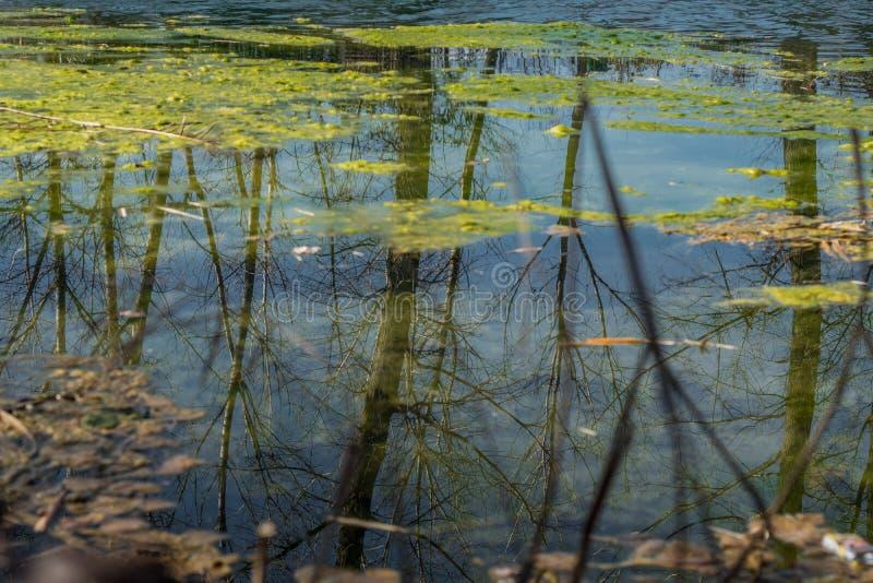 Odbicie susi drzewa w wodzie zdjęcie stock
