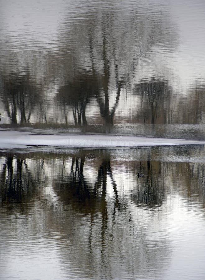 Odbicie w wodzie Wiosna krajobraz drzewa odbijający w wodzie maszerujący Roztapiający lód i śnieg obrazy royalty free