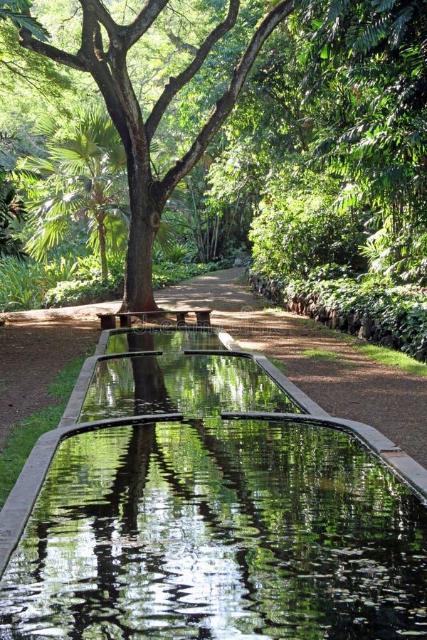 Odbijający w wodzie w Allerton Krajowym Tropikalnym ogródzie botanicznym, Kauai fotografia stock