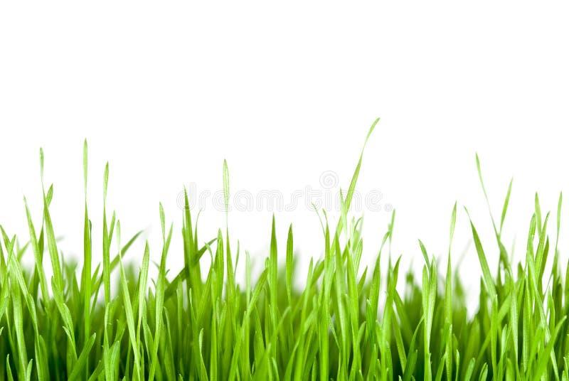 odbitkowa trawy zieleni przestrzeń obraz stock