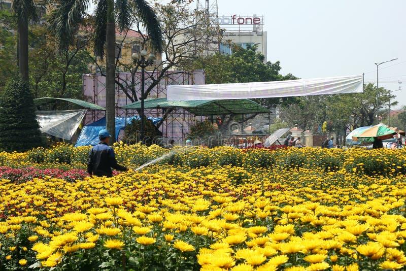 Odcień Wietnam, Luty, - 10, 2018: Mężczyzna nawadnia kwiaty w garnek roślinie z żółtymi chryzantemami na tle miasto obrazy stock