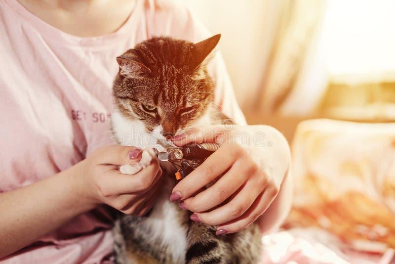 odcina kotów pazury fotografia stock