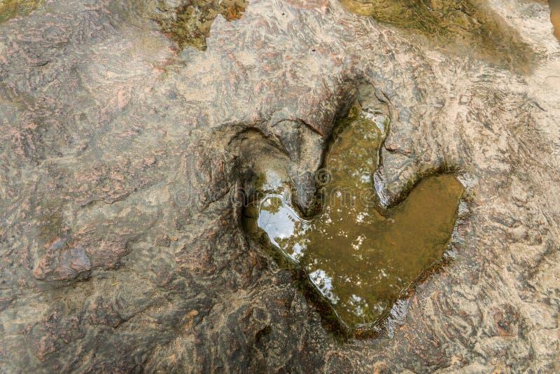 Odcisk stopy dinosaura Carnotaurus na zmielonym pobliskim strumieniu przy Phu Faek lasu państwowego parkiem, Kalasin, Tajlandia W zdjęcie stock