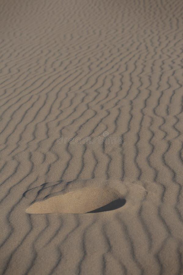 Odcisk stopy na świetnym piasku Doñana fotografia royalty free