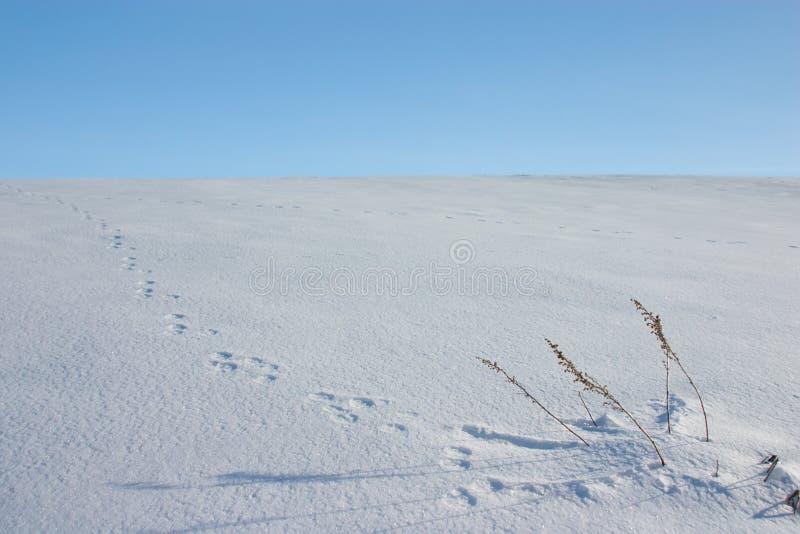 odcisk stopy zwierzęcy śnieg obraz stock