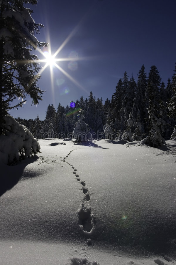 odciski stóp śnieżni zdjęcia royalty free
