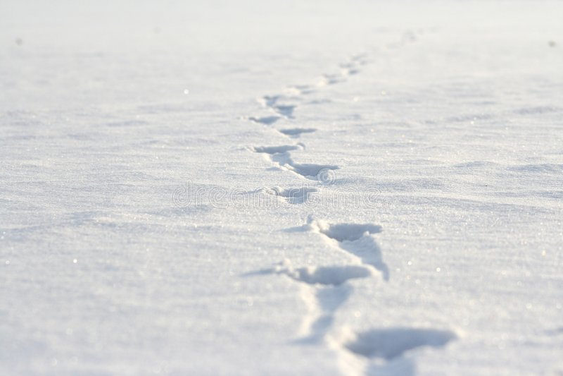 odciski stóp śnieżni obrazy royalty free
