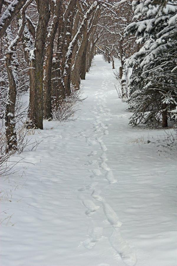 odciski stóp śnieżni zdjęcia stock