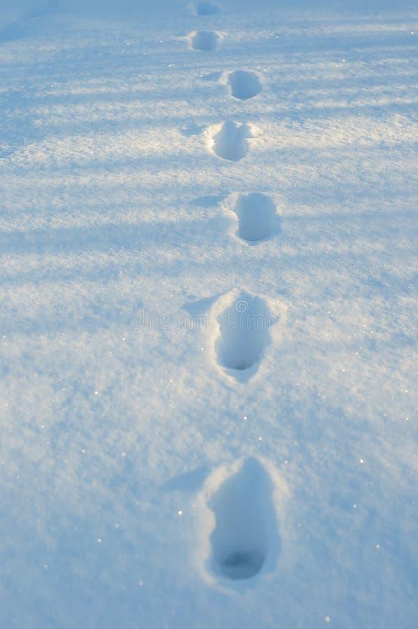Odciski stopy w świeżym białym śniegu Zbliżenie kroki w głębokim śniegu obraz royalty free