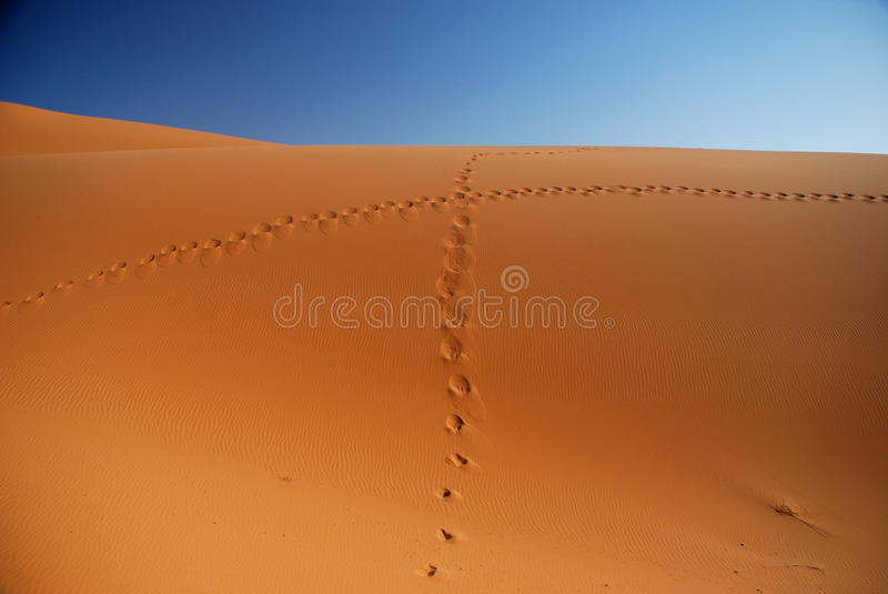 Odciski stopy w piasku. Erg Chebbi, Sahara, Maroko zdjęcie royalty free