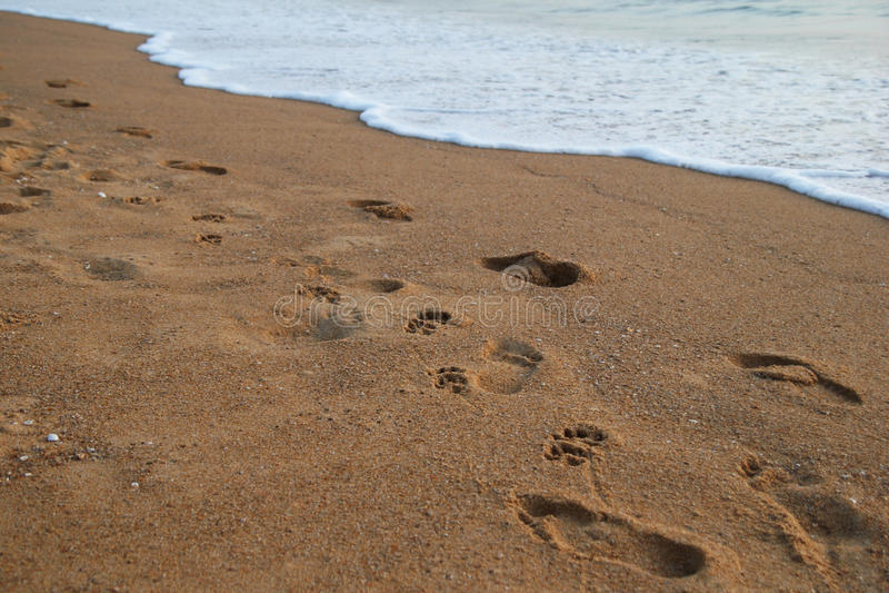 Odciski stopy zaludniają blisko morze i psy na piasek plaży obraz stock